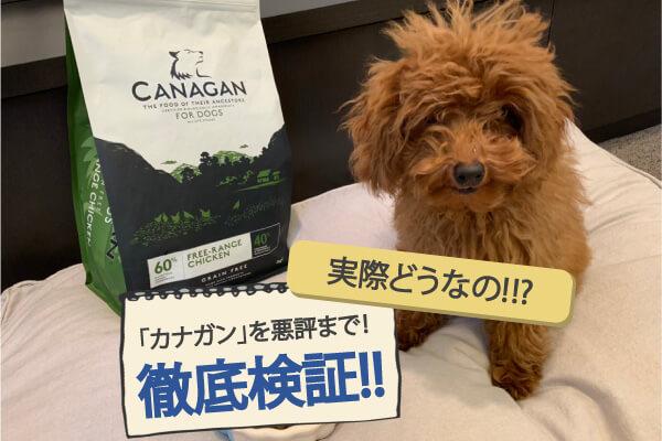 カナガンの悪い口コミ評判を徹底検証!愛犬に1ヶ月与えた結果は?