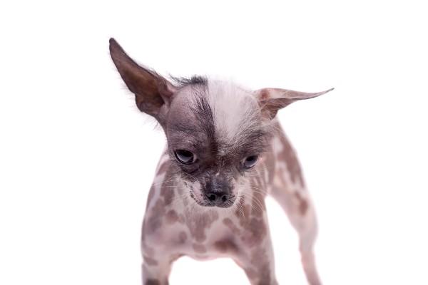 悲しい・痩せすぎの犬