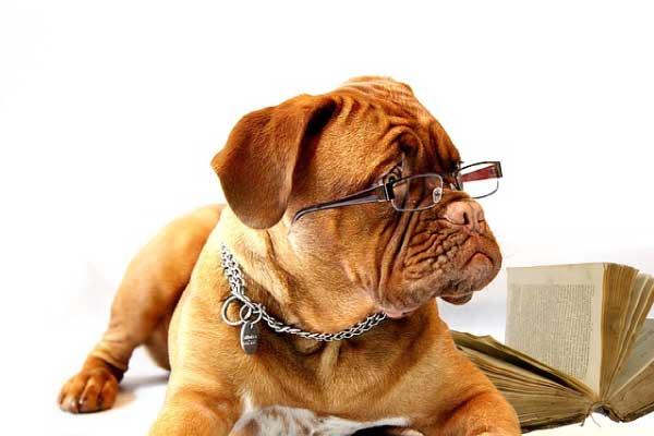 【獣医師監修】シニア犬おすすめドッグフードランキング12選
