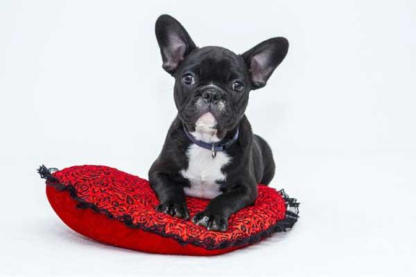 【獣医師監修】犬の便秘の原因・症状・解消法|何日続くと病気の可能性がある?