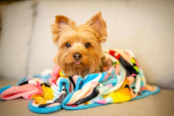 【獣医師監修】犬がブルブル震える。考えられる5つの原因と対処法は?