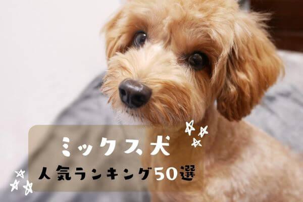 ミックス犬人気ランキングTOP50!全101種類・購入方法も紹介【2021年最新】