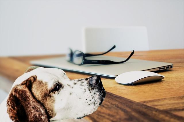 犬 ノート
