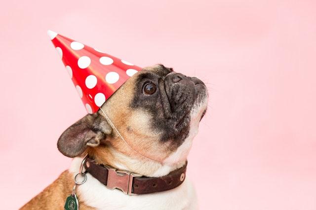 お誕生日_犬