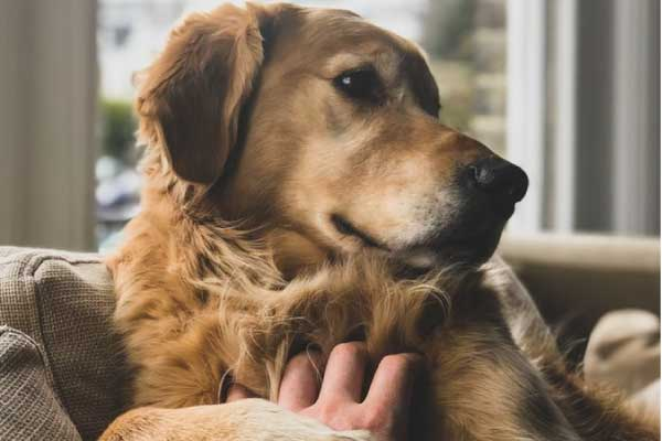 毛並みが良い犬