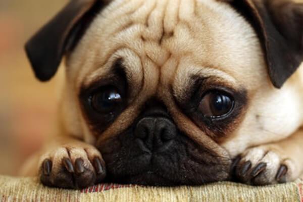 愛犬のストレスサインとは?下痢や噛むときなど症状別の解消法を紹介!