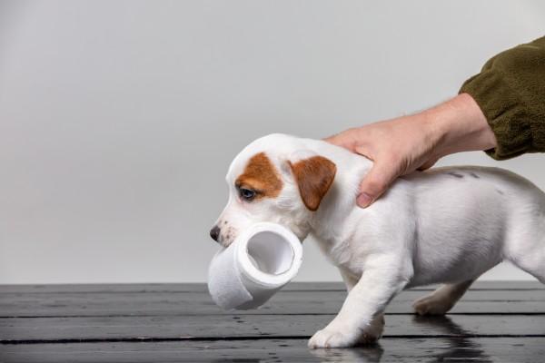 【獣医師監修】犬が食糞する原因|家で簡単に対策・解決できるコツ4選!