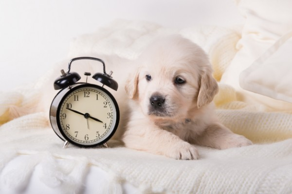 時計と仔犬