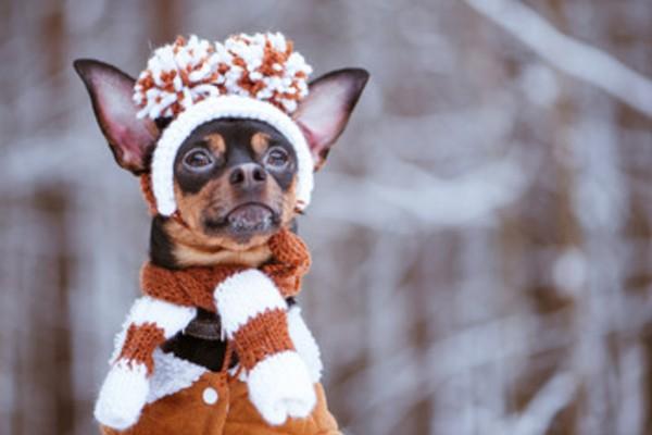 犬のマフラー、冬