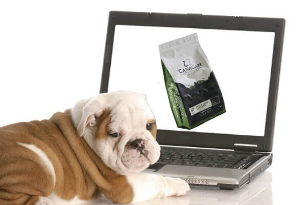 カナガン インターネット 犬