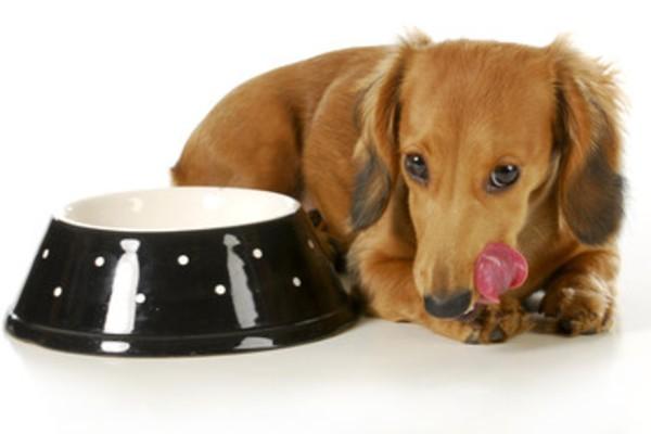 ドッグフードの容器と犬