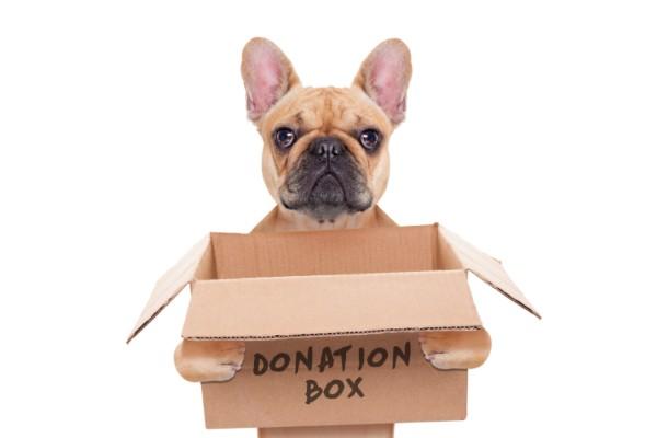 寄付ボックスを持つフレンチブルドッグ