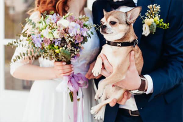 ペット好きの婚活