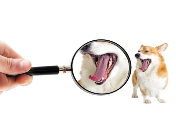 口のチェックする犬