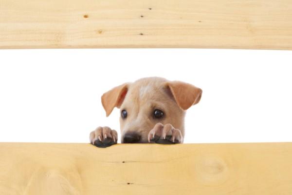 隠れてる犬