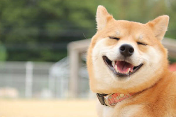 笑顔のワンちゃん