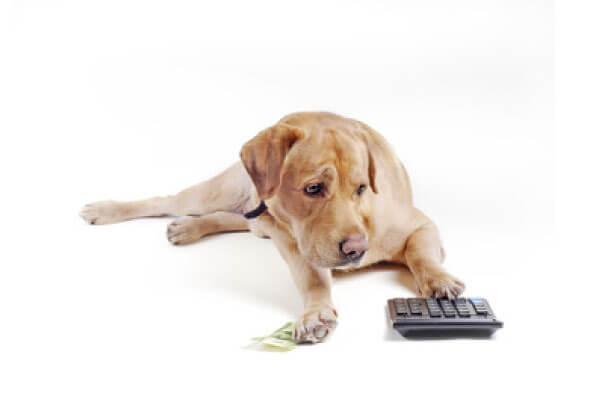 犬 貯金 計算