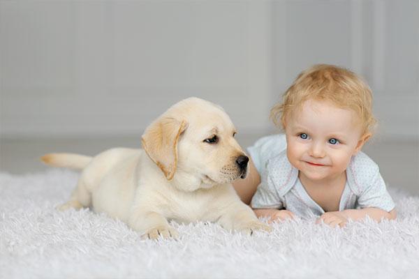 【獣医師監修】子犬におすすめのドッグフード人気ランキング10選