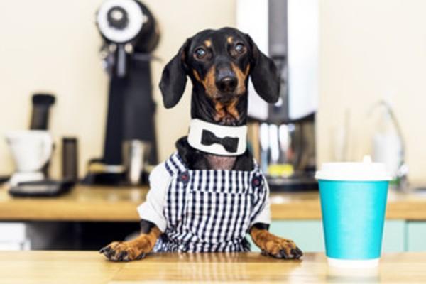 【非公開】【都内】犬と行けるドッグカフェ人気おすすめ15選|おしゃれで可愛い店舗を紹介!