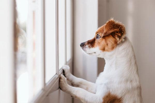 犬のお留守番は最初が肝!しつけ方や必要な道具を解説します