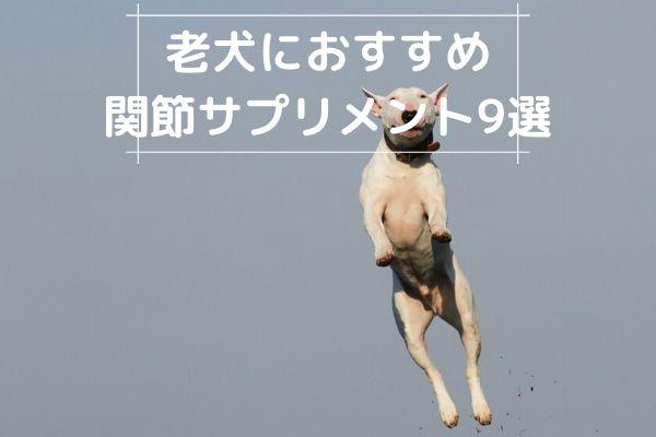 老犬におすすめの関節用サプリメント9選|実際の使用者の口コミは?