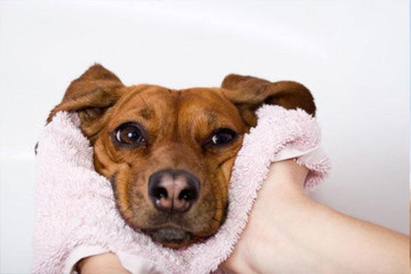 愛犬のお風呂