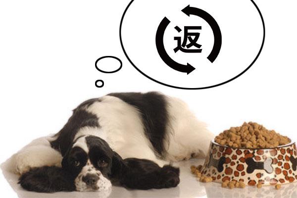 【獣医師監修】ドッグフードって返品できるの?|安心の返金保証があるドッグフード8選