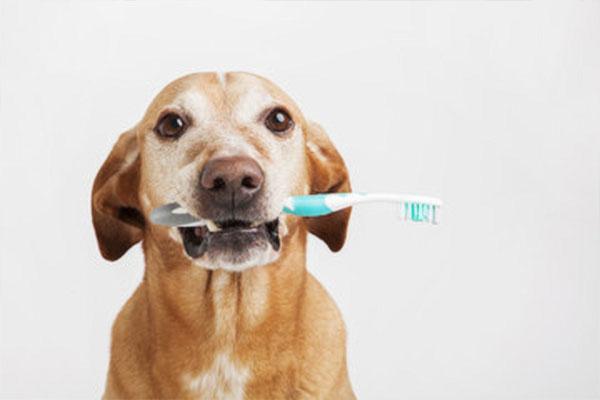 愛犬の歯みがき