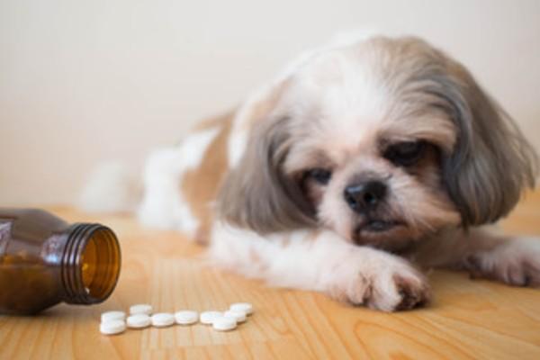 犬とサプリメント