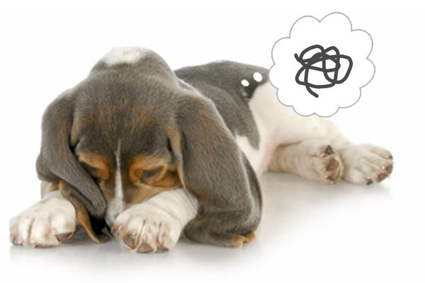 【獣医師監修】愛犬のウンチが臭い!原因・対策|もしかして病気?