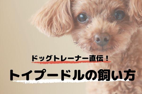 ドッグトレーナーが教える!トイプードルの飼い方、特徴、病気は?