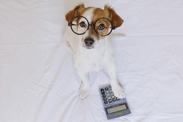 犬 計算機