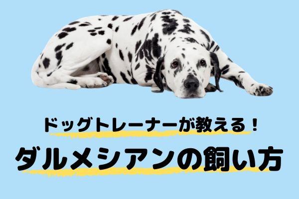 ドッグトレーナーが教える!ダルメシアンの飼い方、特徴、病気は?
