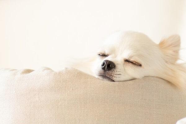 犬 リラックス 寝る