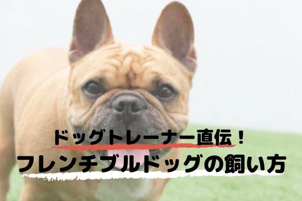 ドッグトレーナーが教える!フレンチブルドッグの飼い方、特徴、病気は?