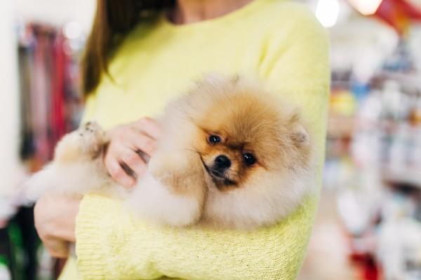 今年は犬を迎えた人が2倍!?きっかけは「コロナの影響」が1位に…【114人のリアルな声を大調査!】