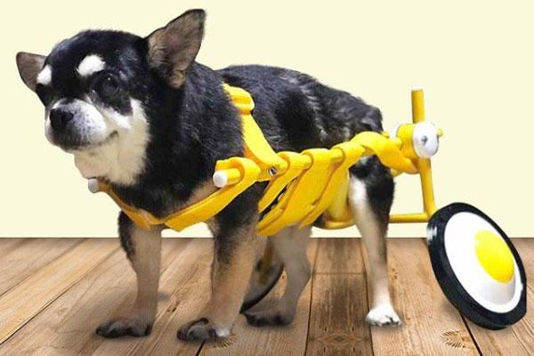 犬の車いす『スタンダードイエロー』Sサイズ