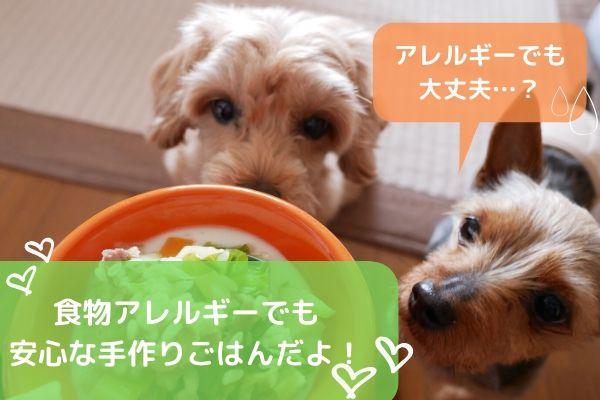 【看護師執筆】犬の食物アレルギー性皮膚炎に効果的な手作りごはん