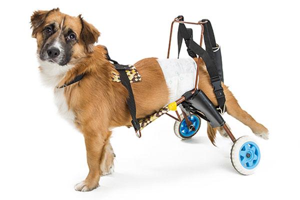 犬用車いす