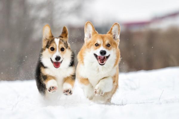 犬との雪遊びで注意すること4選!危険から守る準備は出来ていますか?
