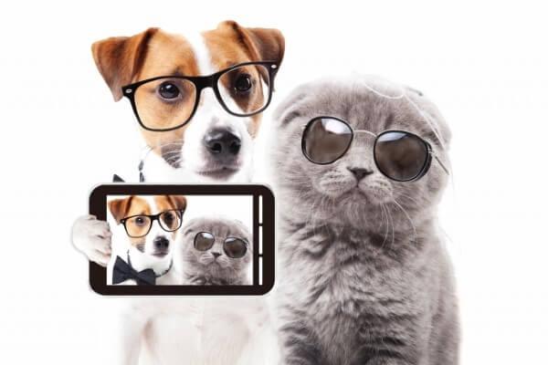 Instagramで人気の犬!おすすめワンスタグラマー25選|