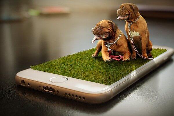 犬とスマホ