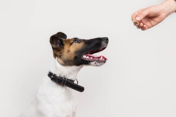 犬のおすわりの教え方