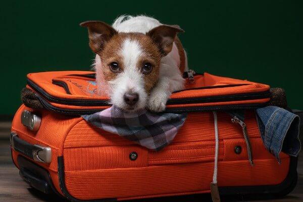 犬の防災セットおすすめランキング10選|災害時に必要なグッズ一覧