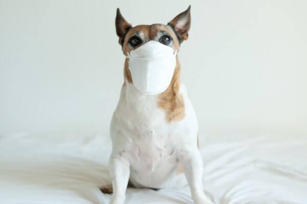 【獣医師取材】犬も新型コロナウイルス感染症にかかる?除菌スプレーの予防対策効果は!?