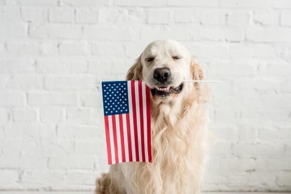 犬 アメリカ