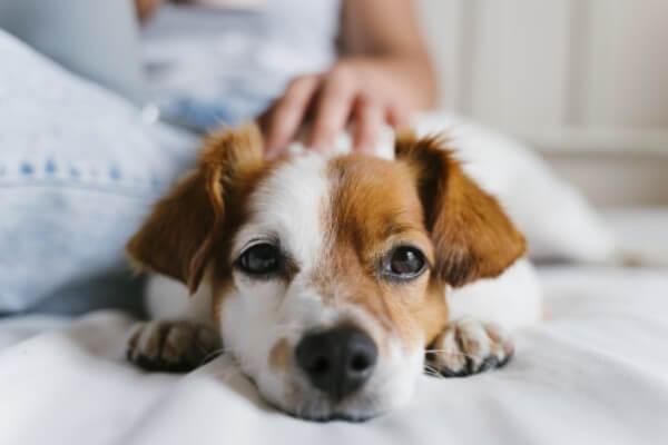 子犬の「ふせ」の教え方と必要性は?失敗する場合の対処法と3つのコツ!