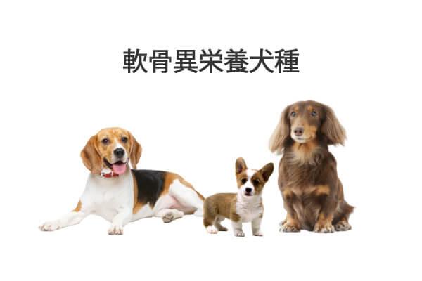 軟骨異栄養犬種