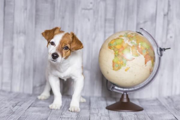 ドッグフードの原産国で一番安全な国はどこ?法律と習慣を徹底調査!ドイツ・イギリス・アメリカ・カナダ・ニュージーランドなど