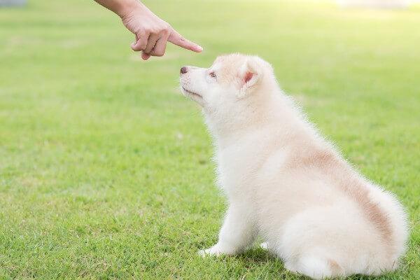 犬の正しい叱り方って知ってる?シーン別の叱り方も紹介!